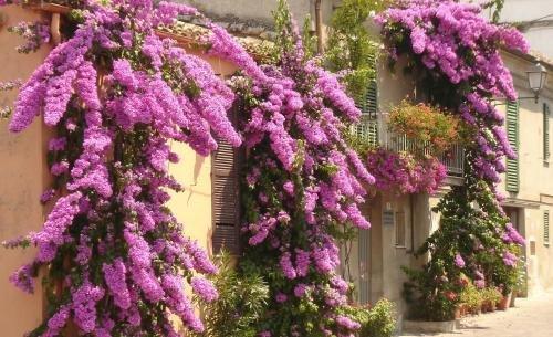 Appartamenti Via Firenze - фото 9