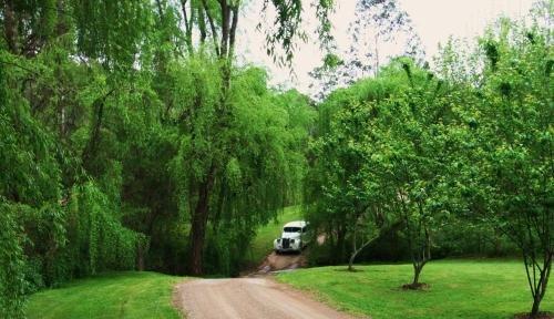 Cedars Mount View - фото 20