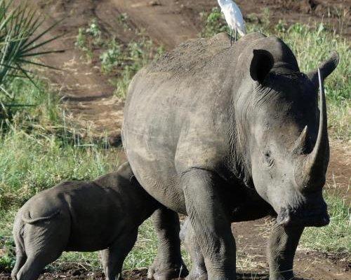 Ikweta Safari Camp - фото 2