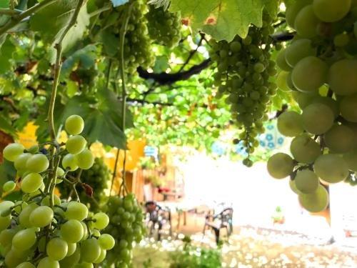 Apartment Olivar - фото 14