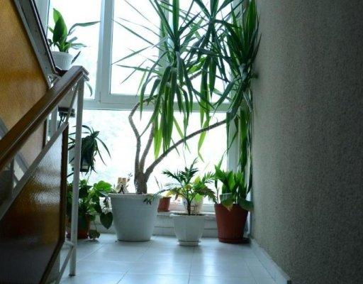 Galia Guest House - фото 9