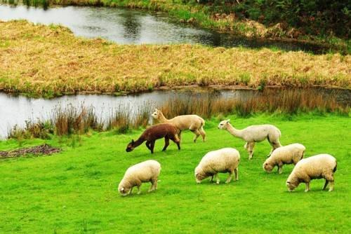 Johanna River Farm & Cottages - фото 17