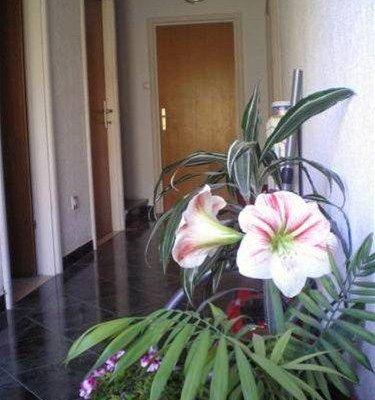 Francesca Apartments - фото 14