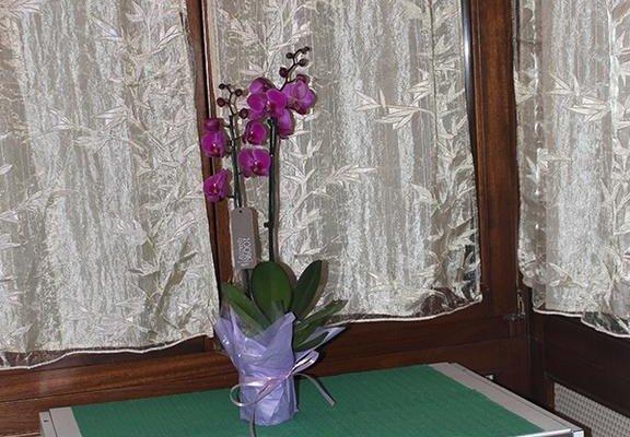 Avitabile's Guest House - фото 12