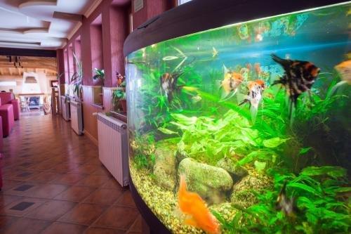 Отель Севастократор - фото 14