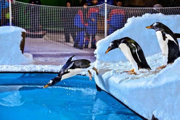 Hilton Garden Inn Dubai Mall Of The Emirates - фото 50