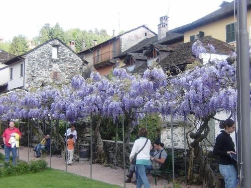 Appartamenti e Camere Orta - фото 20
