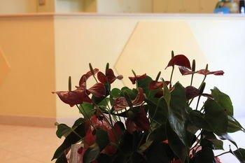HH Il Gabbiano - фото 10