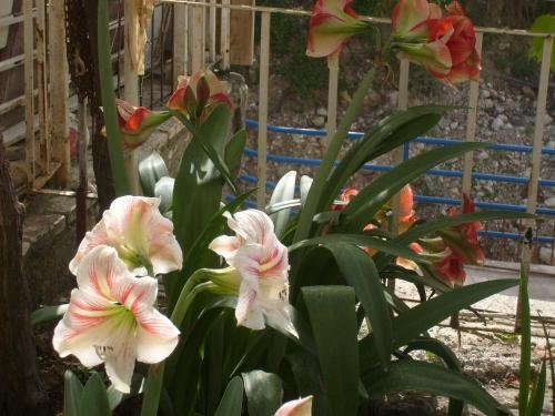 Apartments Bovan - фото 19