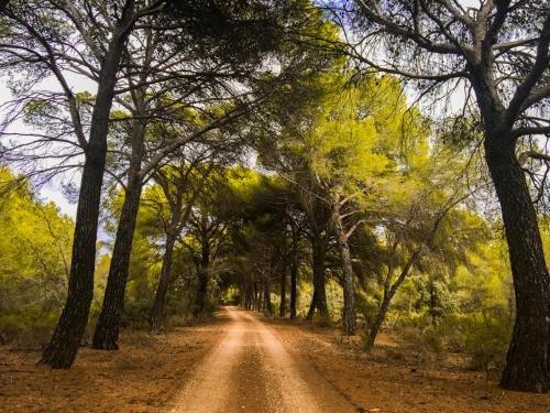 Casa Rural Monte Higueras - фото 2