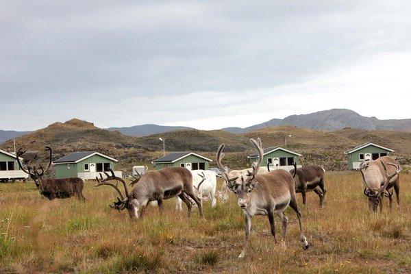 Nordkapp Camping - фото 16