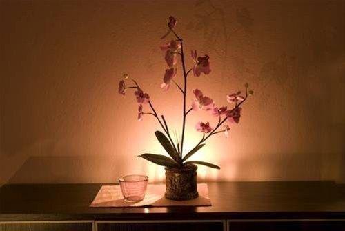 Apartament Orchidea - фото 7