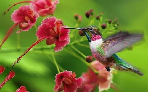 Pousada Beija Flor - фото 7