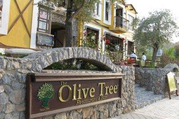 The Olive Tree Studios