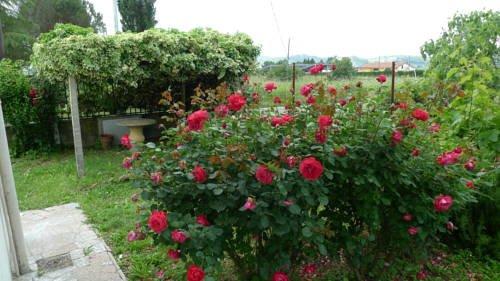 All'Antico Prato - фото 23