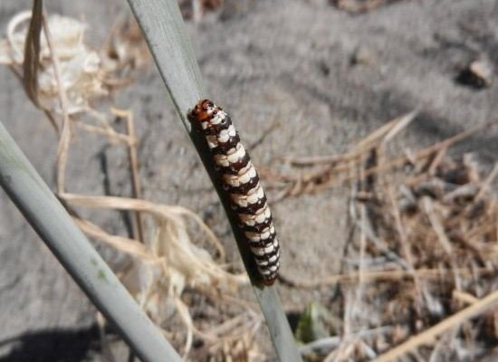 Casa Vacanze Bio Mele - фото 11