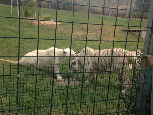 Apartamento Turistico Ciguena de Arguedas - фото 18