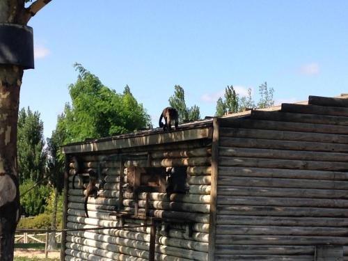 Apartamento Turistico Ciguena de Arguedas - фото 23