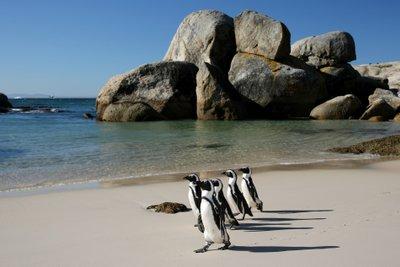 Анапа - Кейптаун