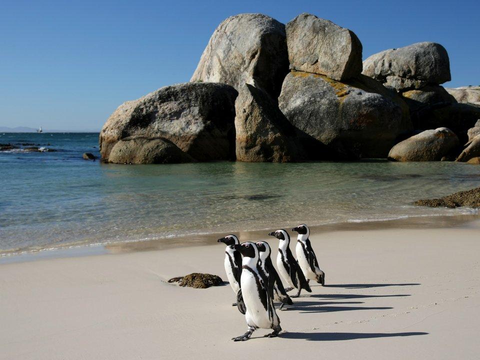 Дешевые авиабилеты Килиманджаро Кейптаун