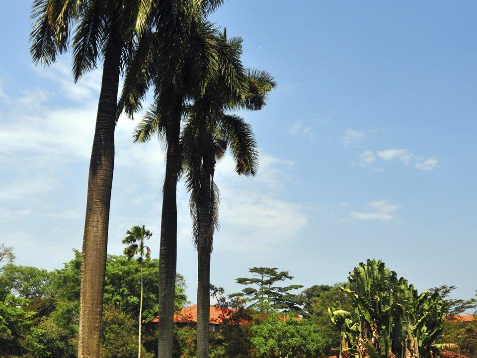 Дешевые авиабилеты Санкт-Петербург Уганда